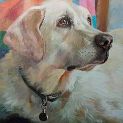 Megan dog portrait img_6