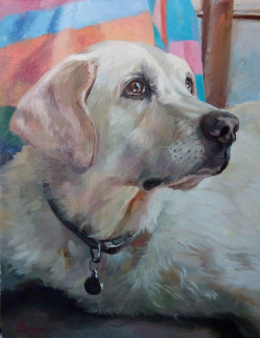 Megan dog portrait img_3