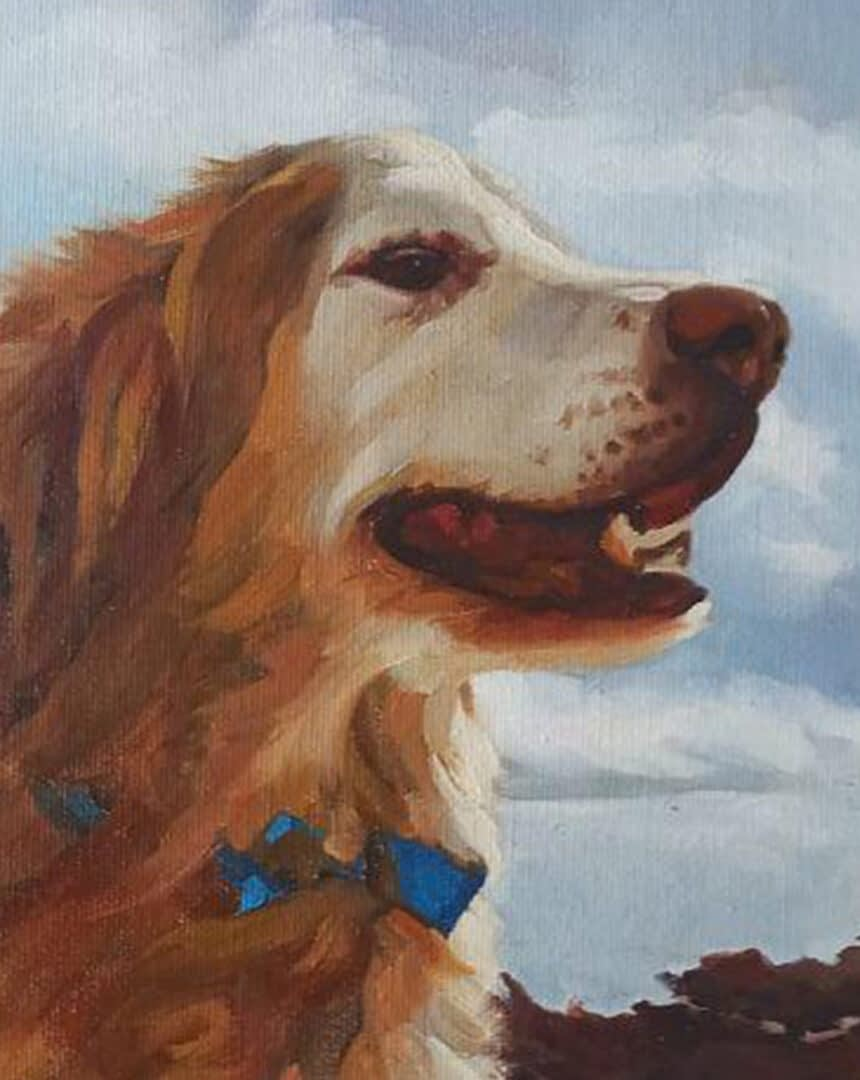 Robin dog portrait img_1