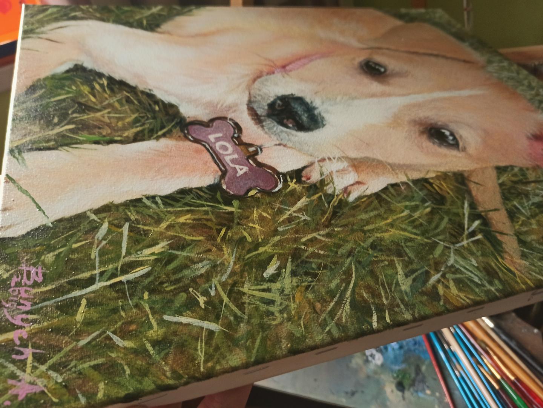 Janet pet portrait img_2